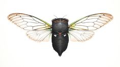 Annual Green Cicada - Andrew Leach Projects