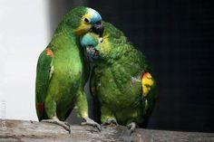 Funny Wildlife, Sweet Love Birds!! by Fabio Carrilho