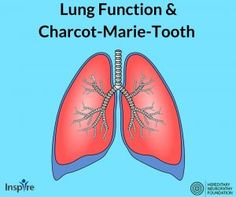 HNF wants to help our Inspire members get answers to questions related to Charcot-Marie-Tooth. One topic that has been addressed is lung function and breathing issues with Charcot-Marie-Tooth. Some CMT patients have reported phrenic nerve impairment. The phrenic nerve innervates the diaphragm: the primary muscle used during the process of inhalation. An improperly functioning phrenic …