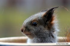 squirrel squirrel