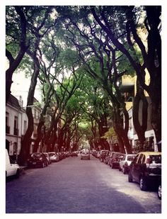 Buenos Aires -- all the trees lines the streets like this Palermo, Countryside Village, South America, Latin America, Places Ive Been, The Good Place, Scenery, Around The Worlds, Country Roads