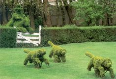 """dogs romping at Ladew Topiary Gardens in Maryland - they call this scene """"The Chase"""""""