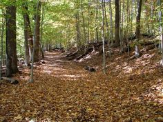 Find hundreds of miles of great hiking trails in the Washington, DC area, including the best hiking trails in Maryland and Virginia,