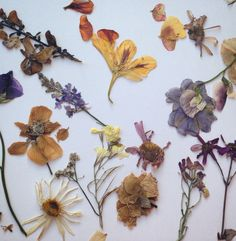 proudbean: more of the pressed flowers! they are so nice n soft!!