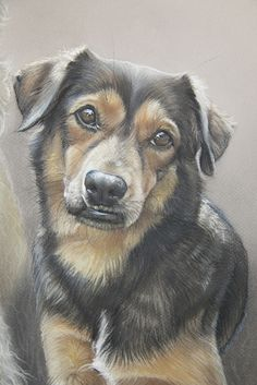 Dog art by Amy Little.  Smiley, from Lotte and Smiley, 2015.  Soft pastel on Mi-Teintes pastel paper.