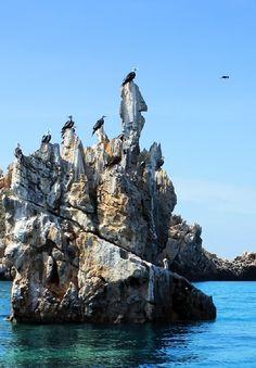 """Aves disfrutando una maravillosa vista en el exterior de Isla Borracha dentro de una formación llamada """"Los Beatos"""", al Noreste del Parque Nacional Mochima."""