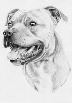 Learn To Draw A Realistic Rose - Drawing On Demand - Realistic Rose Drawing, Realistic Animal Drawings, Pencil Drawings Of Animals, Amazing Drawings, Animal Sketches, Art Drawings, Drawings Of Dogs, Drawing Animals, Dog Pencil Drawing