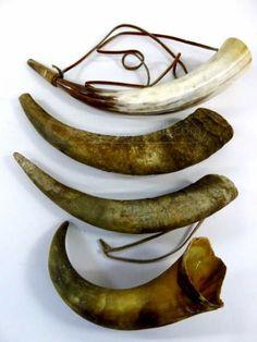 Horns.  Used for Black Powder.