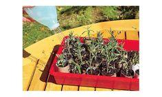 Lavendel vermehren Joy, Canning, Garden, Outdoor, Decor, Patio, Hydrangea Garden, Pruning Fruit Trees, Apartment Plants