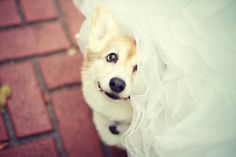 Wedding Pictures Dog - 81 Pictures - Very interesting post: Dog - 81 Pictures.сom lot of interesting things on Funny Animals, Funny Dog. Animals And Pets, Funny Animals, Cute Animals, Cute Puppies, Cute Dogs, Dog Background, Photos With Dog, Dog Wedding, Wedding Shit