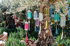 color olive tree @wyhnalek