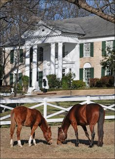Bandit, left, and Max are two of the horses who currently live at Graceland. Elvis Presley House, Elvis Presley Graceland, Elvis Presley Music, Elvis Presley Photos, Elvis And Priscilla, Lisa Marie Presley, Graceland Mansion, Memphis Tennessee, Rolodex
