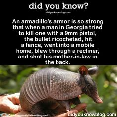 did you know? BTW, Mom is ok but the armadillo died on impact