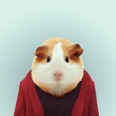 ZOO PORTRAITS by Yago Partal — GUINEA PIG by Yago Partal  for ZOO PORTRAITS