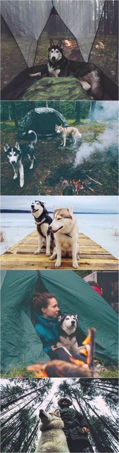 A Russian couple explore the wilds of their vast country with their beautiful pack of #huskies.