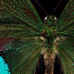 Microsculpture - The Insect Portraits of Levon Biss