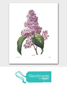 Lilac Art (Cottage Home Wall Decor, Redoute Botanical Flower Artwork) Nature Print - Unframed from Cloud Nine Prints https://www.amazon.com/dp/B01GGOIVBS/ref=hnd_sw_r_pi_dp_N5GHzb85N1MCR #handmadeatamazon
