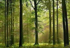 fototapeta v lese - Hledat Googlem