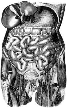 anatomía próstata vesícula seminole flex