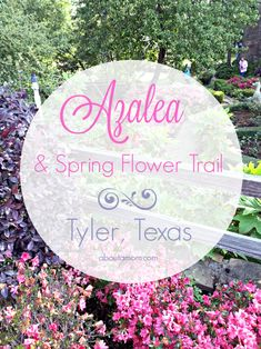 Each year, during late March and early April, something magical happens in East Texas. Bursting with blooms, the 10-mile long Tyler Texas Azalea Trail is most definitely the highlight of the spring season in East Texas. (hosted) #TexasToDo