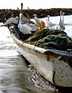 Heavy Load, egrets and pelicans waiting for a handout ~ by DandyFresh, via Flickr Lighthouse Keeper, Float Your Boat, Beach Essentials, Deep Blue Sea, Tug Boats, Sail Away, Sea Birds, Beach Scenes, Beach Trip