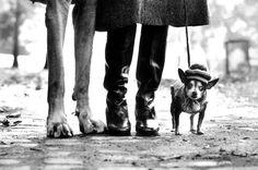Grande y pequeño, elegante.  Contraste canino