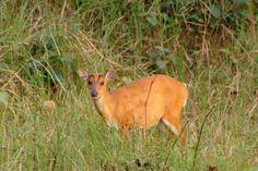wildlife in chitwan