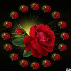 Rose Flower Wallpaper, Flowers Gif, Heart Wallpaper, Good Morning My Love, Good Morning Picture, Morning Pictures, Beautiful Moon, Beautiful Roses, Animated Heart Gif