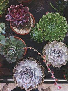 #succulents #botanicals #garden