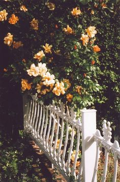 white picket fence + flowers