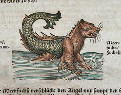 seafox - jost amman 1565  plinys nat hist .
