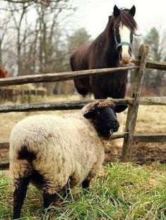 Farm Animals, Animals And Pets, Cute Animals, Wild Animals, Country Farm, Country Life, Country Living, Country Roads, Beautiful Horses