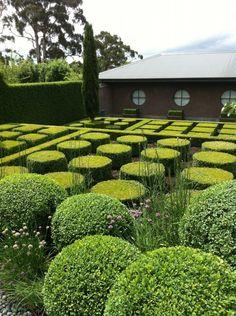 Modern boxwood topiary