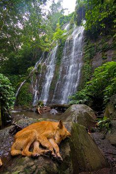 Siete Cascadas (Seven Waterfalls) hike, outside of Juayúa, El Salvador by gsz, via Flickr