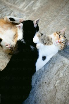 Cats Fighting, Like A Cat, Games, Animals, Animales, Animaux, Gaming, Animal, Animais