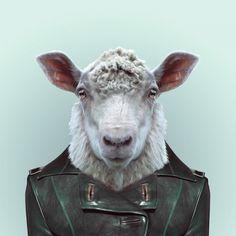 Zoo animals are so en vogue in this hilarious portrait series   Creative Boom Blog   Art, Design, Creativity