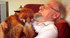 An oldie, but worth sharing:  Back in 2007, a man named Mike Towler rescued a fox that had been badly attacked and was suffering from toxoplasmosis.  He named the little guy Cropper, adopted him and became best friends with him.