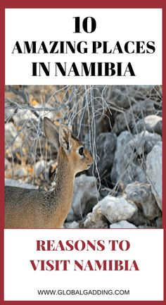 10 amazing places in namibia Travel Couple, Family Travel, Best Travel Guides, Travel Tips, Travel Plan, Safari, All About Africa, Road Trip Packing, Countries To Visit