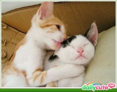 CATS R CATS AND THEY LOVE EACH OTHER 2!