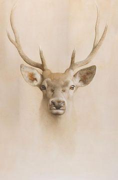 Marzio Tamer, Young Deer, dry brush watercolor, cm 130 x deer muzzle animals nature realism contemporary art salamon tamer Brush Watercolor, Watercolor Animals, Watercolor Paintings, Modern Artwork, Contemporary Art, Animal Drawings, Art Drawings, Drawing Animals, Mini Mundo