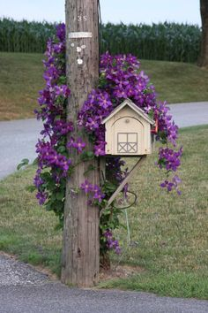 Clematis on a mailbox. Somewhere around Lancaster, PA. Clematis on a mailbox. Outdoor Decor, Garden Design, Backyard Landscaping, Mailbox Decor, Outdoor Gardens, Mailbox Landscaping, Mulch Landscaping, Clematis, Backyard