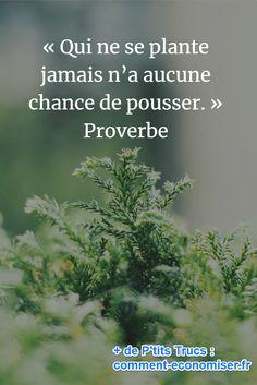 « Qui ne se plante jamais n'a aucune chance de pousser. » Proverbe