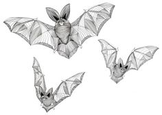Flock of Bats, original pen and ink drawing by MissDalys