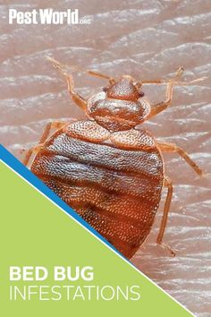 A bed bug infestation can happen any time of year. Arm yourself with these must-know prevention tips from PestWorld Bed Bugs, Arm, Tips, Arms, Counseling