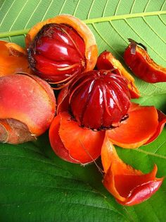 fruits of a type of dillenia species from China #eat #drink #digest #snack #gourmet #breakfast #lunch #dinner #curious #strange #unknown #diet #frightening