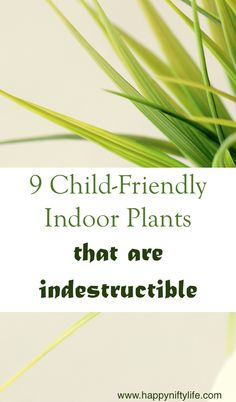 9 child-friendly indoor plants that are indestructible. Bringing in nature into your home through simple indoor plants is a beautiful way to decorate.