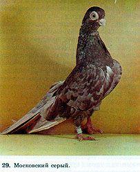 image006 Parrot, Owl, Bird, Animals, Parrot Bird, Animales, Animaux, Owls, Birds