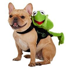 Disney - Muppets - Kermit The Frog - Dress Up Dog Costume >>> Details can be found by clicking on the image. (This is an affiliate link and I receive a commission for the sales) #DogLovers