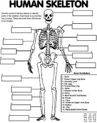 human anatomy worksheets | Science- Human Body | Pinterest | Human ...