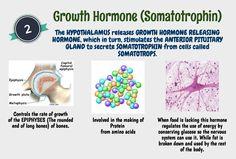 Growth Hormone (Somatotrophin)
